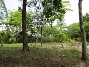 sakura12IMG_0098.JPG