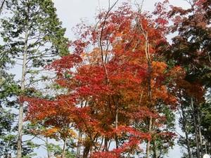 sakuragaoka12IMG_0419.JPG