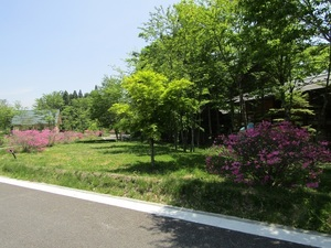 sakuragaokaeIMG_0121.JPG