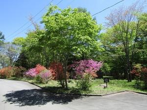 sakuragaokavillageIMG_0057.JPG
