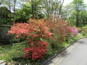 sakuragaokavillageIMG_0559.JPG