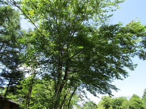 sakuragaokavillageIMG_0653.JPG