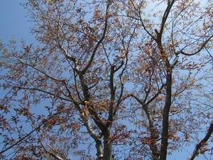 sakuragaokavillageIMG_0925.JPG